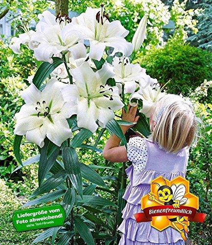 Blumen Pflanzen Seite 10 Von 13 Amazingmarketde